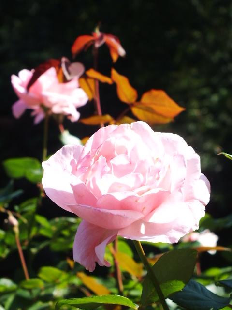 10月19日 横浜こども植物園 その1_e0145782_445432.jpg
