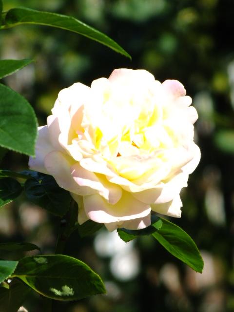 10月19日 横浜こども植物園 その1_e0145782_4462739.jpg