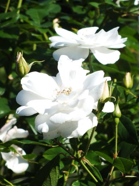 10月19日 横浜こども植物園 その1_e0145782_447446.jpg