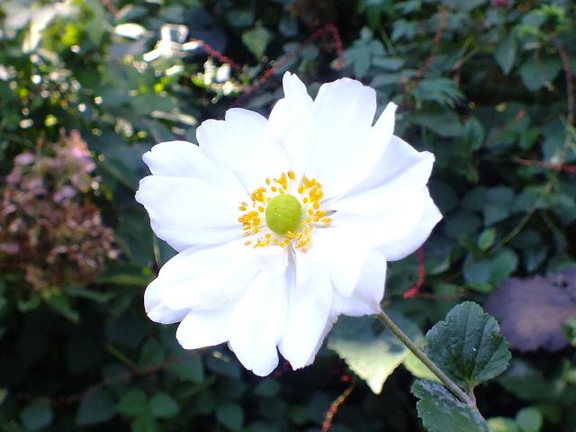 10月19日 横浜こども植物園 その1_e0145782_4492798.jpg