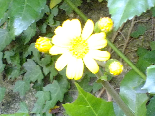 10月19日 横浜こども植物園 その1_e0145782_4554567.jpg