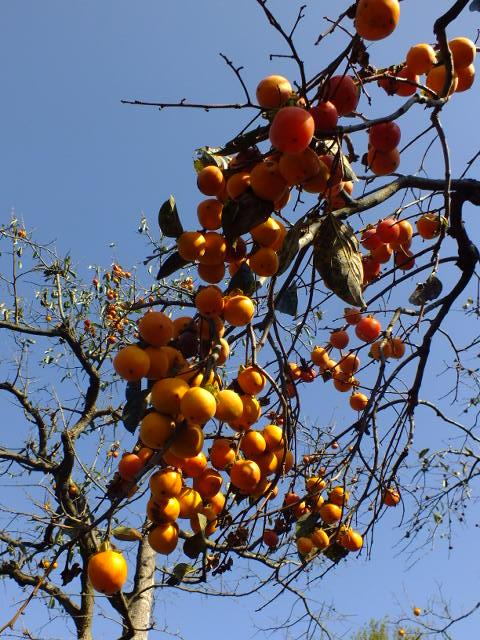 10月19日 横浜こども植物園 その2_e0145782_5133673.jpg