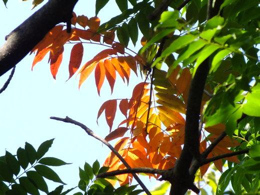10月19日 横浜こども植物園 その2_e0145782_521417.jpg