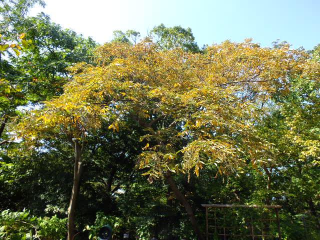 10月19日 横浜こども植物園 その2_e0145782_5214351.jpg