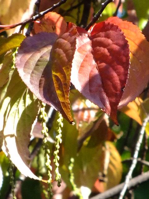 10月19日 横浜こども植物園 その2_e0145782_5263037.jpg
