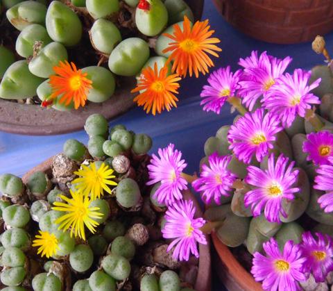 今咲いている花と、大文字草を少し・・・^^_a0136293_17433225.jpg
