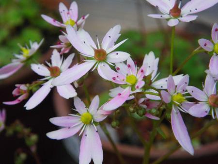 今咲いている花と、大文字草を少し・・・^^_a0136293_17473897.jpg