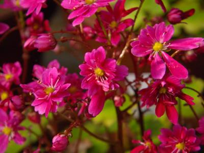今咲いている花と、大文字草を少し・・・^^_a0136293_17475362.jpg