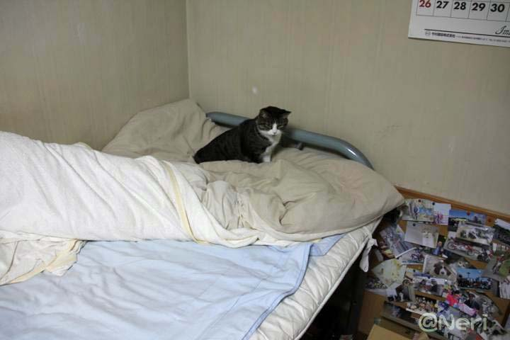 【猫】夜になると_f0141609_23201121.jpg