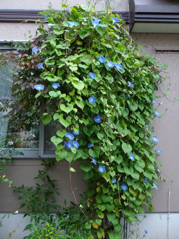 夏と秋が混在する庭_c0025115_18492819.jpg
