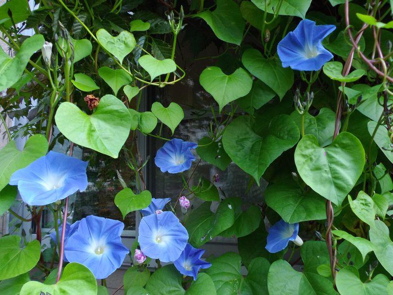 夏と秋が混在する庭_c0025115_184979.jpg