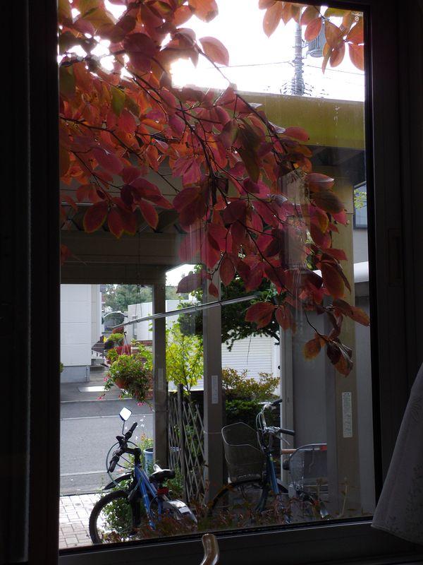 夏と秋が混在する庭_c0025115_1901149.jpg