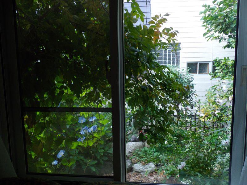 夏と秋が混在する庭_c0025115_190869.jpg