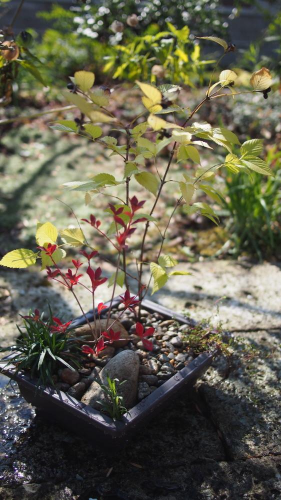 「小さいお庭の作庭」ワークショップ_d0122640_9483140.jpg