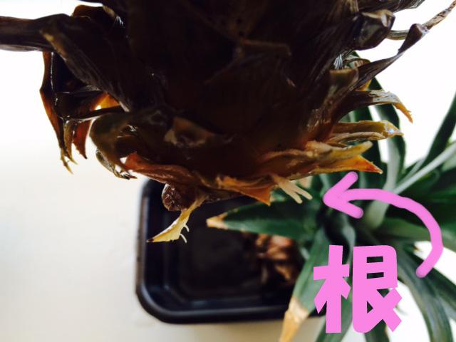 10月21日 植物の秋です。_b0158746_1712147.jpg