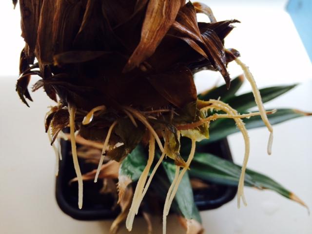 10月21日 植物の秋です。_b0158746_1725634.jpg