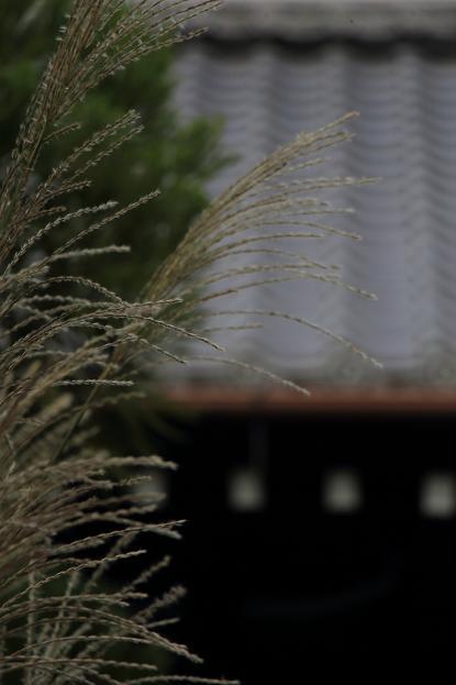 そうだ京都へ行こう2014盛秋 ♪ _e0295348_13465340.jpg