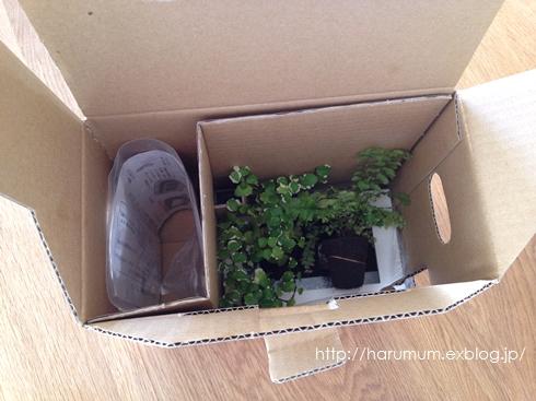無印の壁に掛けられる観葉植物。_d0291758_16272523.jpg