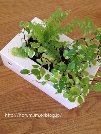 無印の壁に掛けられる観葉植物。_d0291758_1630996.jpg