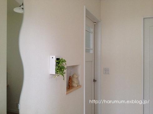 無印の壁に掛けられる観葉植物。_d0291758_16373562.jpg