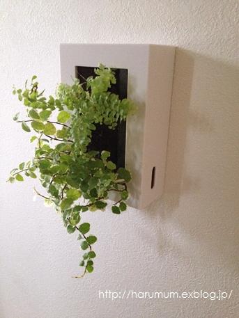 無印の壁に掛けられる観葉植物。_d0291758_16455363.jpg