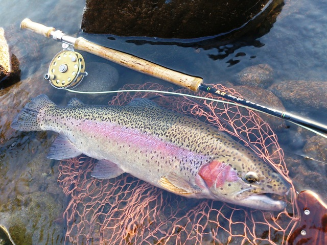利根冬季釣り場&犀川(今年12回目)_c0157482_09243313.jpg