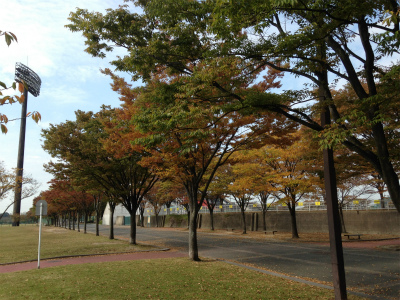 秋の香り_f0220089_18471426.jpg