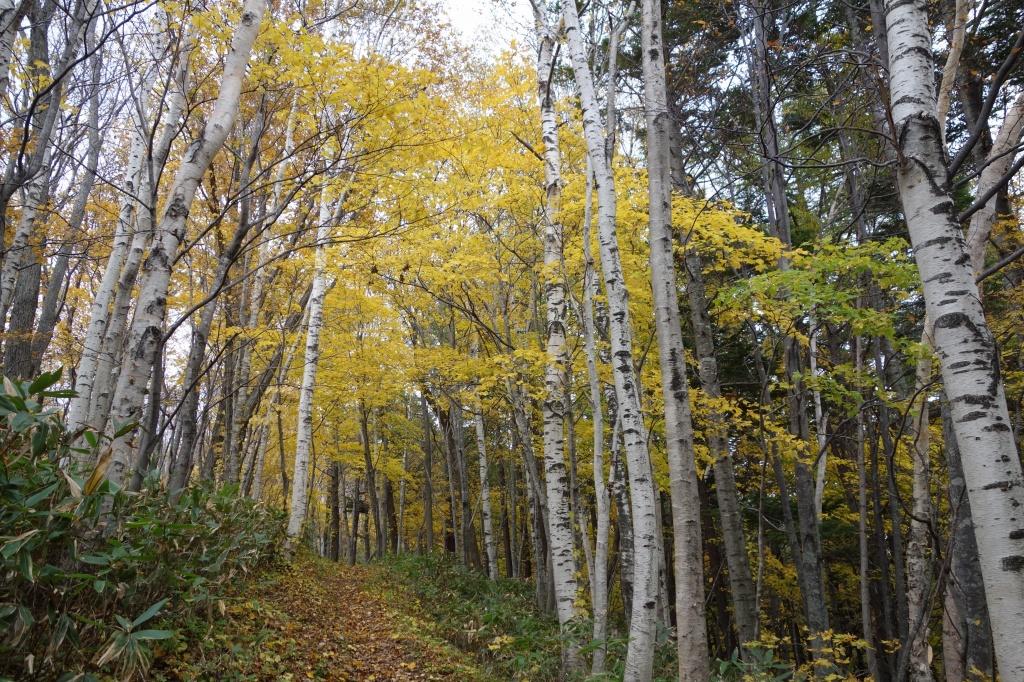 小林峠から砥石山、10月20日_f0138096_2023166.jpg