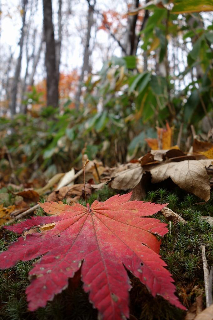 小林峠から砥石山、10月20日_f0138096_2033864.jpg