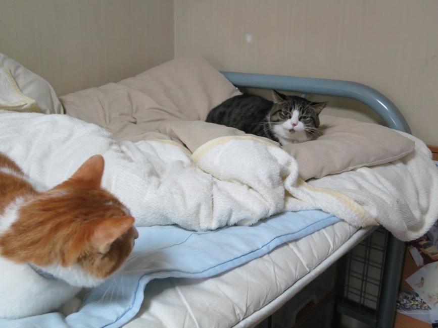 【猫】距離・・_f0141609_22373711.jpg
