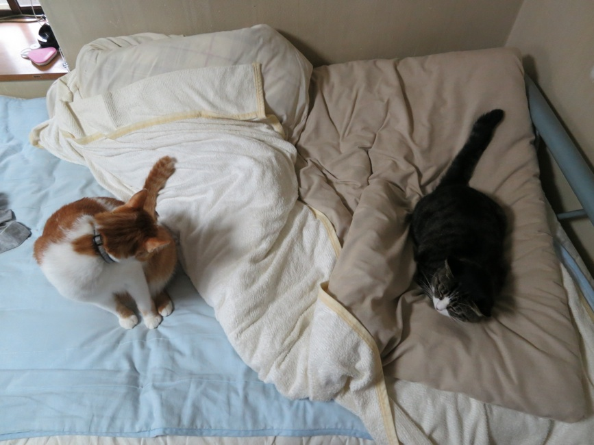 【猫】距離・・_f0141609_22381661.jpg