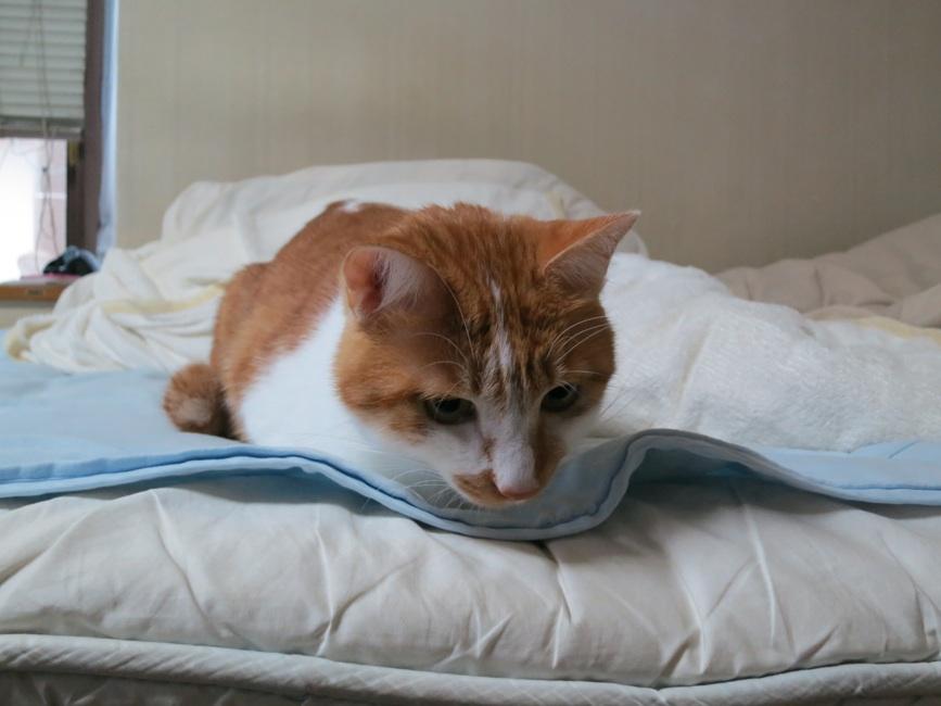 【猫】距離・・_f0141609_22394815.jpg