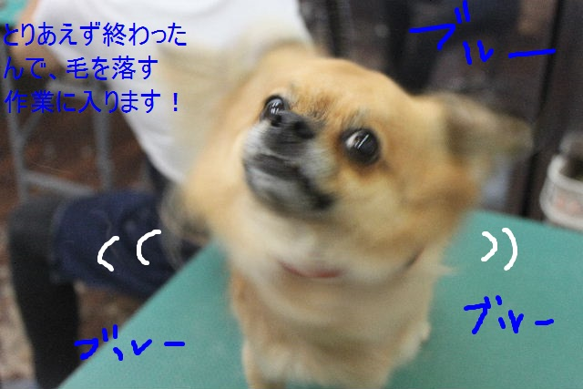 b0130018_953678.jpg