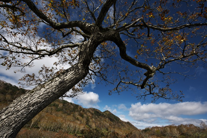 Fragments of autumn  ・・・秋の断片・・・_f0333031_08072652.jpg