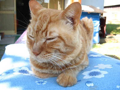 猫のたりちゃんのしつけ_f0182936_1913231.jpg