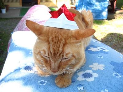 猫のたりちゃんのしつけ_f0182936_1915837.jpg