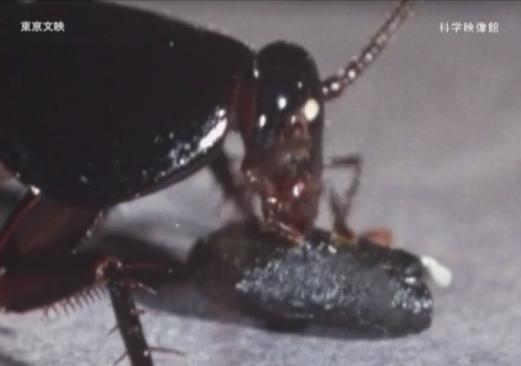 本日の配信映画は「ゴキブリ百科」_b0115553_23252722.png