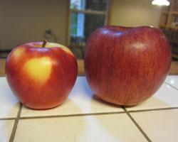 りんご、りんご。_d0050155_9321898.jpg