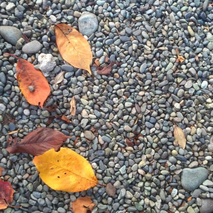 Fallen leaves_b0134285_09312220.jpg