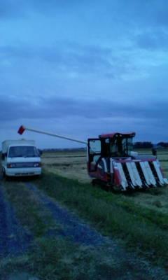 やっと稲刈りが終わりました。_d0026905_16511088.jpg