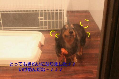 b0130018_15113139.jpg