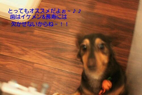 b0130018_15122652.jpg