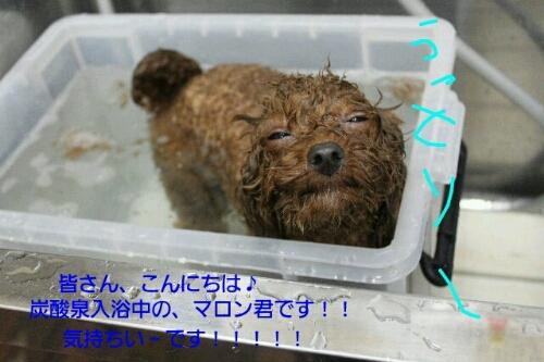 乾燥。。。。_b0130018_1513671.jpg