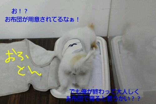 乾燥。。。。_b0130018_1519750.jpg