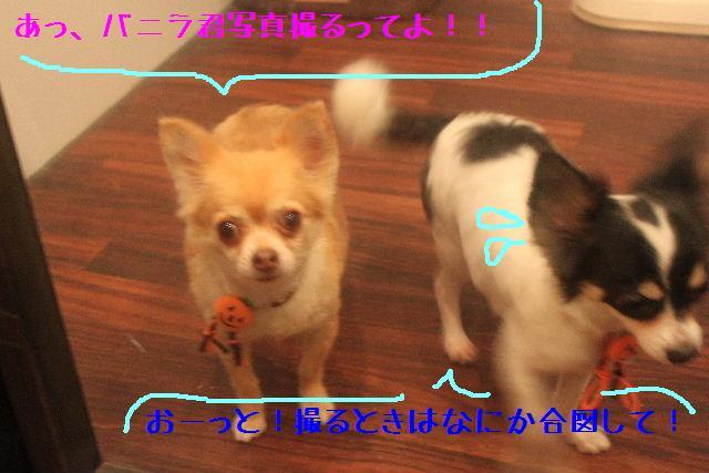 b0130018_16135449.jpg