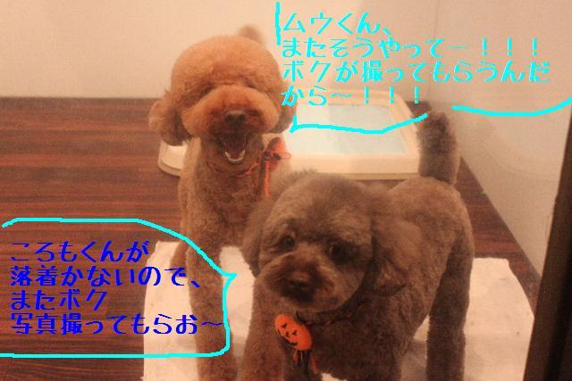 b0130018_16225291.jpg