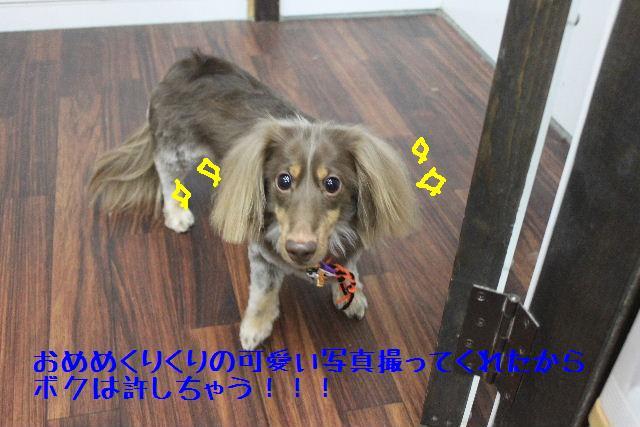 b0130018_16271341.jpg