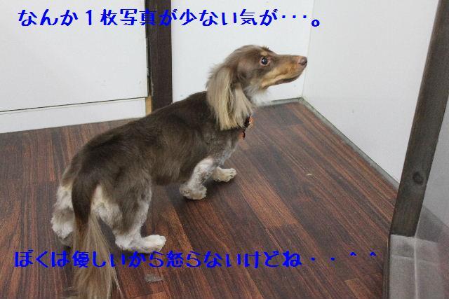 b0130018_1627335.jpg
