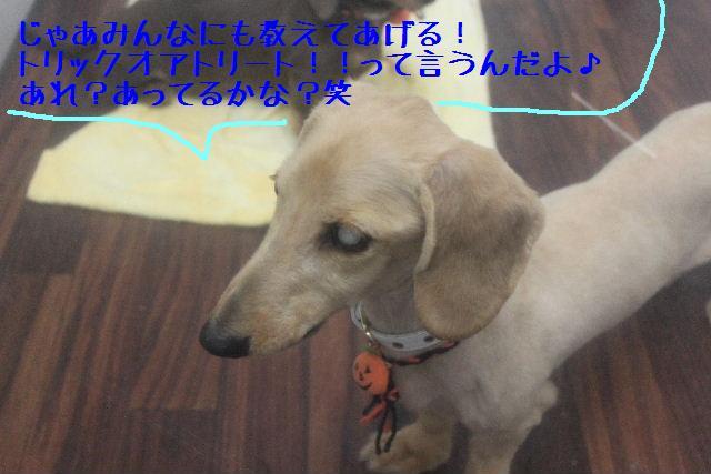 b0130018_1651729.jpg