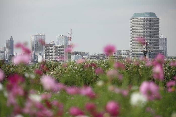 足立区江北公園の花めぐり。_a0214329_0191051.jpg